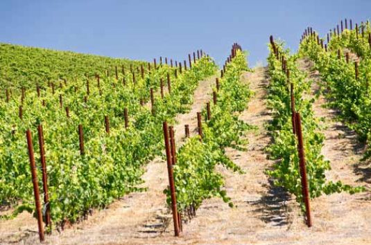 central_valley_vineyards